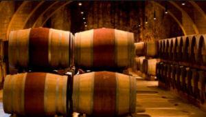 wine barrels inside winery